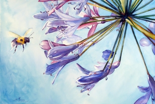 Sue-Moses_Agapanthus & Bee